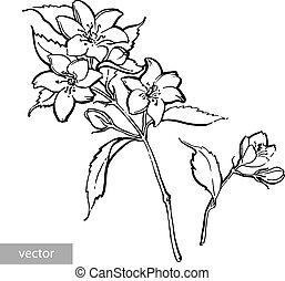 Watercolor pencil handdraw illustration. Garden jasmine ...