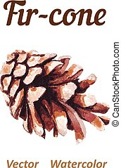 Watercolor pine cone on a white background.