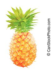 Watercolor pineapple fruit on white
