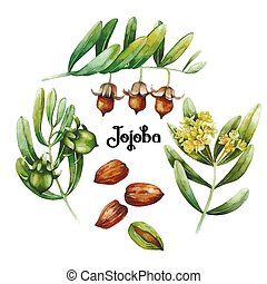 watercolor, plant, jojoba