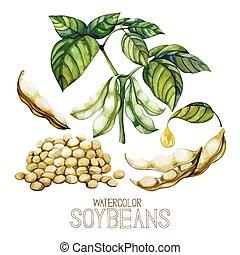 watercolor, planten, set, soy