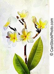 Watercolor Plumeria flowers