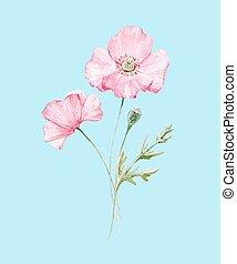 Watercolor poppy flower