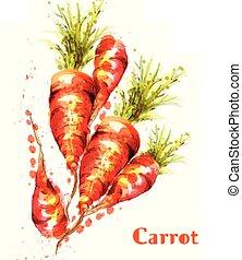 watercolor., primavera, carote, isolato, vettore, veggies, illustrazioni, fresco
