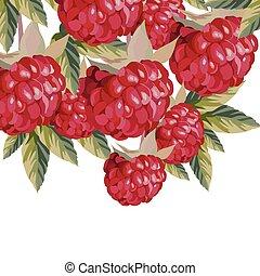 Watercolor Raspberries fruits
