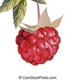 Watercolor Raspberry isolated
