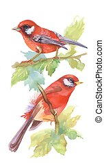 Watercolor red Birds on branches