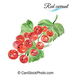 Watercolor red currant - Watercolor fruit red currant...