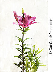 Watercolor red lily