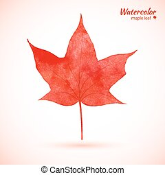 Watercolor red maple leaf.