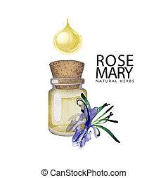 Watercolor rosemary oil
