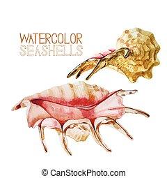 Watercolor seashells collection