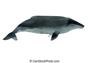 Watercolor sketch of gray whale. Illustration isolated on white background.
