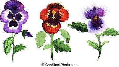 pansies - Watercolor sketch of set of pansies flowers