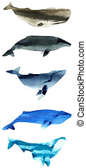 Watercolor sketch of whales. Illustration isolated on white...