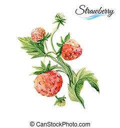 Watercolor strawberry