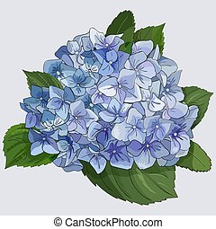 Watercolor style branch of hydrangea flowers. Isolated florals object on white background.