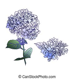Watercolor style branch of hydrangea flowers. Set of Isolated florals object on white background.