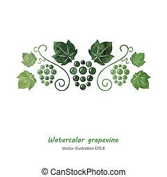 Watercolor style green grape vine.
