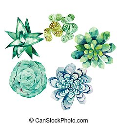 Watercolor succulent collection isolated on white background. Cute floral elements for your design