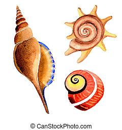 Watercolor summer beach seashell tropical elements, underwater creatures.