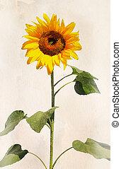 Watercolor sunflower - Beautiful sunflower. Artistic ...