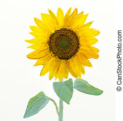 Watercolor -Sunflower - Oil and watercolor stylized picture...