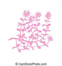 Watercolor thyme. Hand draw branches of thyme illustration. ...