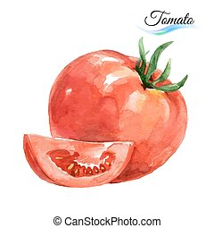 Watercolor tomato - Watercolor vegetables tomato isolated on...