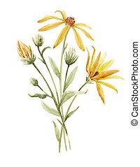 Watercolor topinambur illustration