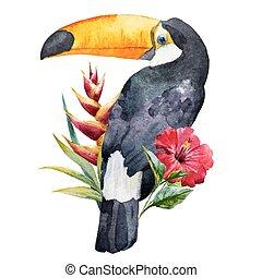 watercolor, toucan