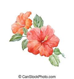 watercolor, tropische , vector, hibiscus, bloem