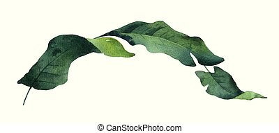 Watercolor vector green branch tropical leaves isolated on white background.