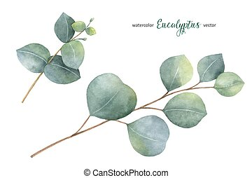 Watercolor vector hand painted set with eucalyptus leaves...