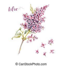 Watercolor vector lilac flower - Beautiful vector ...