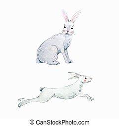Watercolor vector rabbit set