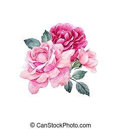 watercolor, vector, rozen, samenstelling