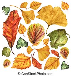 Watercolor vector set of autumn leaves. Ginkgo, birch, ivy, begonia, physalis and other