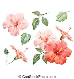 Watercolor vector tropical hibiscus flower