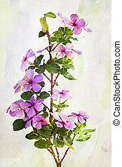 Watercolor Vinca flowers