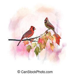 watercolor, vrouwlijk, mannelijke , kardinalen, noordelijk