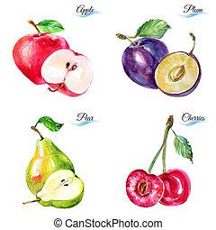 watercolor, vruchten, en, besjes