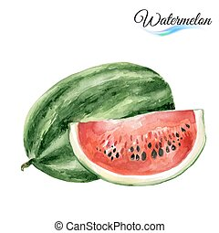 Watercolor watermelon - Watercolor fruit watermelont...