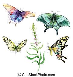 watercolor, werkjes, -, veelkleurig, vlinder, set, knippen, van, de, achtergrond