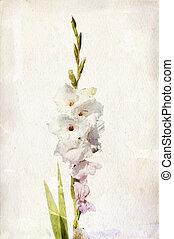 Watercolor white gladiolus