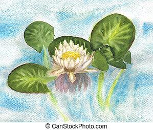 Watercolor white waterlily