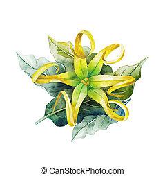 Watercolor ylang ylang design. Hand painted leaves and...
