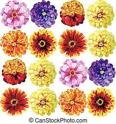 Watercolor zinnia pattern