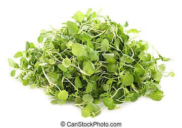 Watercress, Nasturtium officinale, in front of white ...