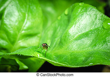 watercrest., flies(drosophila, melanogaster), עוזב